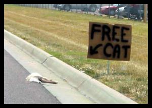 Cat - Free